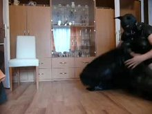 Dogslave - Homemade Femdom